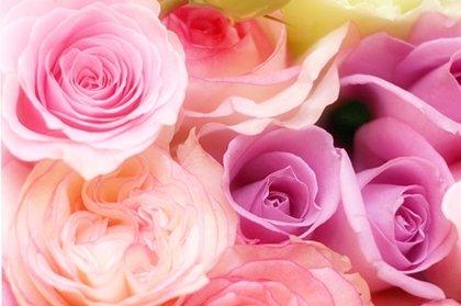 バラの花言葉!色や本数での意味はコレっ!贈る人も贈られた人も!!