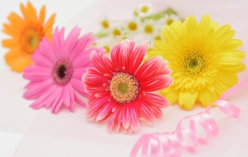 ガーベラの花言葉を色別に!!ポジティブな花言葉が並びます!!