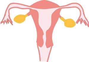 妊娠初期5
